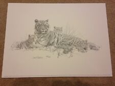 Tigers Pencil Sketch by David Shepherd Limited Edition and signed by the artist