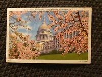 US Capitol Through Cherry Blossoms, Washington DC - Vintage Postcard