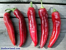 Guajillo Chilie Pepper Seeds, 30+ Seeds