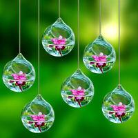 6 pcs Hanging Plant Flower Clear Glass Ball Vase Planter Pot Terrarium Container