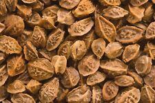 HERB, SALAD BURNET, 200 Heirloom Seed  FREE SHIPPING
