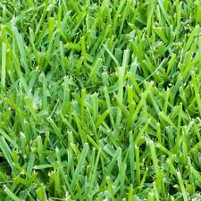 Harmony St. Augustine Sod Turf Plugs Trays Tolerance Outdoor Grass Home 36-Count