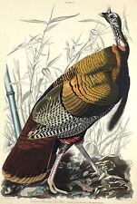 Wild Turkey Fine Art Print 11 x 14 Fallen Timber Birds Wall Decor by Doug Walpus