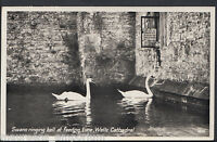 Somerset Postcard - Swans Ringing Bell at Feeding Time, Wells Cathedral  DR603