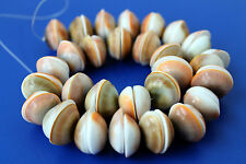 Beautiful Center Drilled Sun Shell Loose Beads - 16 Inch Strand