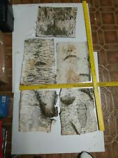 """5Sheets of Real White Birch Bark, each 10"""" x9 inches in size (appr.)"""
