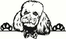 Poodle Vinyl Decal Car Truck Window Sticker (choice of 1 any color)
