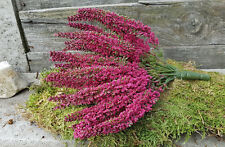 Erika lila pink Erikabund  24 Blütenstiele Strauß Fuchsia Kunstblume Heidekraut