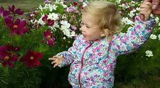 Joules baby girl coat 18-24 months