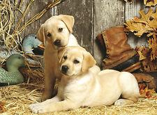 Puzzle Labrador-Welpen, 1500 Teile, Hund, Hündchen, Haus und Hof, Clementoni