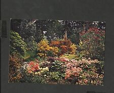 Arthur.Dixon Colour Postcard Inverewe American Garden Western Ross Scotland