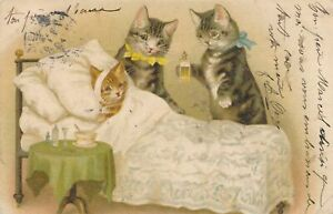 Two Cats and Sick Kitten Helena Maguire Postcard - udb - 1905