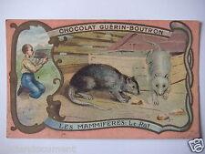 "CHROMOS ANNÉE 1890-1900 CHOCOLAT GUÉRIN-BOUTRON LES MAMMIFÈRES "" LE RAT """
