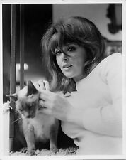 Photo originale Tina Louise chat siamois