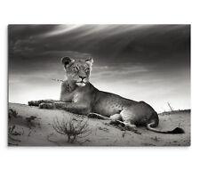 Markenlose Deko-Bilder & -Drucke mit Tier-Motiv fürs Wohnzimmer