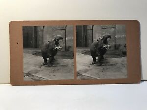 Hippo Photo Stereo Vintage Analogue