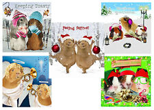 Funny Guinea Pig Christmas Cards Pack of 10 Glitter & Foil Xmas Cards New