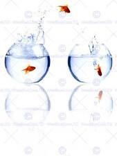 Goldfish bowl fish jumping eau photo art imprimé poster photo BMP2361B
