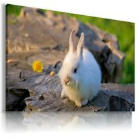 WHITE RABBIT Domestic And wild Animals Canvas Wall Art Picture Large AN77 MATAGA