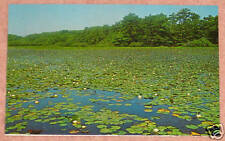 Woodland Pond, Cape Cod Nat. Seashore, Massachusetts