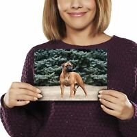 Bullmastiff Dog Bully Sketch Ceramic Mug by paws2print