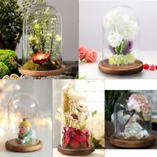Decorative Glass Dome Wooden Base Cloche Bell Jar Display Large Medium Small
