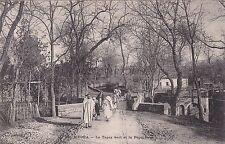 ALGERIA - Medea - Le Tapis vert et la Pepiniere - 1910