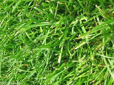 SeedRanch Argentine Bahia Grass Seed - 25 Lbs.