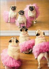 Avanti Press Greeting Card Lot 10 Cards Envelope Birthday Funny Dog Cat Life Pet