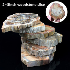 top!Natural Polished Microsection Petrified Wood Quartz Crystal Gift Healing 1PC