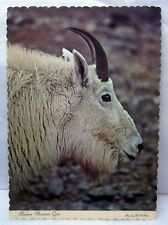 Vintage Alaskan Mountain Goat Postcard Photo Bill Stribling Arctic Circle Card