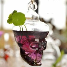 Skull Glass Mini Vase Terrarium Flowers Pots Vases Modern Home Decor Air Planter