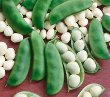 15+ Bean LIMA BABY Seeds   NON-GMO   Fresh Vegetable Garden Seeds US SELLER
