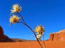 FLOWERS NATURE PLANT FLOWER DESERT LANDSCAPE YELLOW POSTER ART PRINT BB4705A