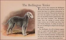 Bedlington Terrier Dog by Megargee, vintage print, authentic 1942
