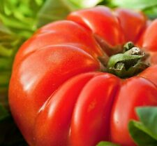 30 Graines de Tomate Marmande - légume ancien jardin potager - méthode BIO