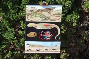 Role Map Schulwandkarte Wall Map Zauneidechse Animal Card School Map Lehrkarte