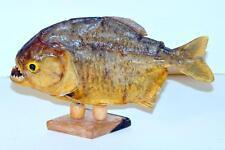 Pirhana specimen base mounted Lot 192