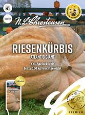 Riesenkürbis 'Atlantic Giant' - Cucurbita maxima, Kürbis, Samen, 01650