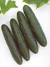 Cucumber Slicemaster Select Vegetable Seeds