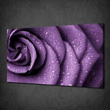 FLOWER PURPLE ROSE WATER DROPS CANVAS WALL ART PRINT PICTURE READY TO HANG