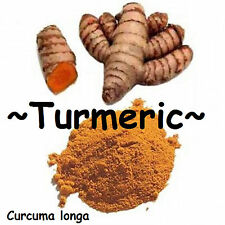 ~TURMERIC~ Curcuma longa 'OLENA Edible SPICE Orange Ginger BareRoot 3 Rhizomes