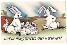 LOTS OF THINGS HAPPENED!  Multiplying BUNNY RABBITS Mom Dad BABIES Postcard