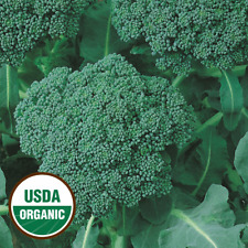 250 Organic Green Sprouting Calabrese Broccoli Seeds - Everwilde Farms Mylar