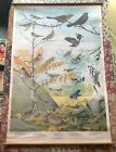 Massachusetts Audubon Bird Chart No.4, artwork by Fuertes - 1924 - GREAT SHAPE!!