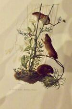 Ancienne Affiche Poster Art Print A3 Mammifères Pl:61 la Souris Naine d'Europe