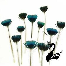 Feather Peacock Crest Corona Crown Feathers (Pack of 20) - Blue/Green/Natural -