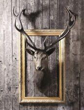 Bilder Wandbild Keilrahmen Leinwand Hirsch Geweih Tiere 46 X 61 cm  Art.466978
