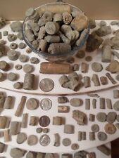 1 Lb Crinoid Large Rare Rocks Kid Fossil Collectors Discover Unique Explore