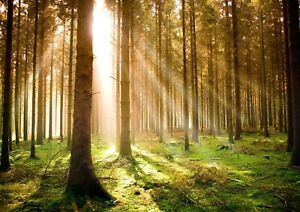Forest At Dawn Woodland Giant Poster - A4 A3 A2 A1 Sizes